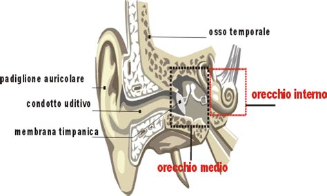 barotrauma orecchio interno arasub taranto di michele cinquegrana via cosenza 18 20