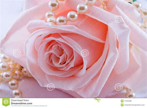 Home Design 3d Gold For Free by Pink Rose And Pearl Necklace Royalty Free Stock Photo