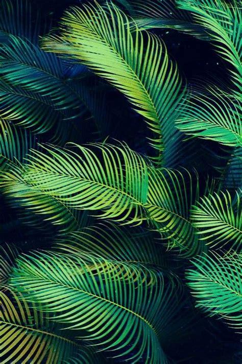 palmenblaetter natur palmen blaetter hintergrundbilder