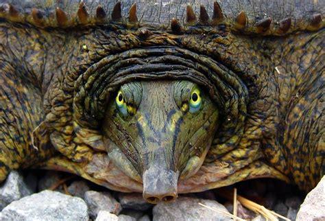 19 weird and wonderful turtle and tortoise species mnn