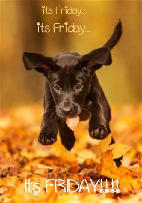 friday puppy 25 best ideas about happy friday on happy weekend quotes its friday