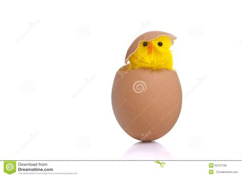 How To Make An Easter Egg Out Of Paper - popping out of egg stock photo image 52157158