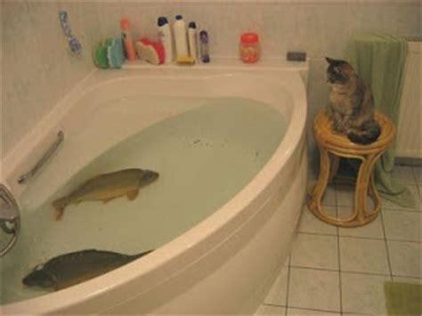 Big Fish Bathtub by Animal Photos Cat Keeping On Fish In
