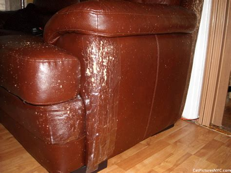 my cat scratched my leather couch leather sofa cats how to repair cat claw marks on leather