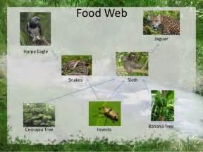 Jaguars Food Chain Folivora