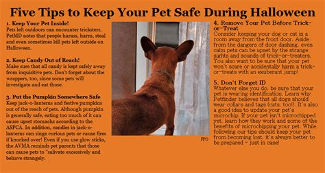 How To Keep Pets by Tips To Keep Your Pet Safe This