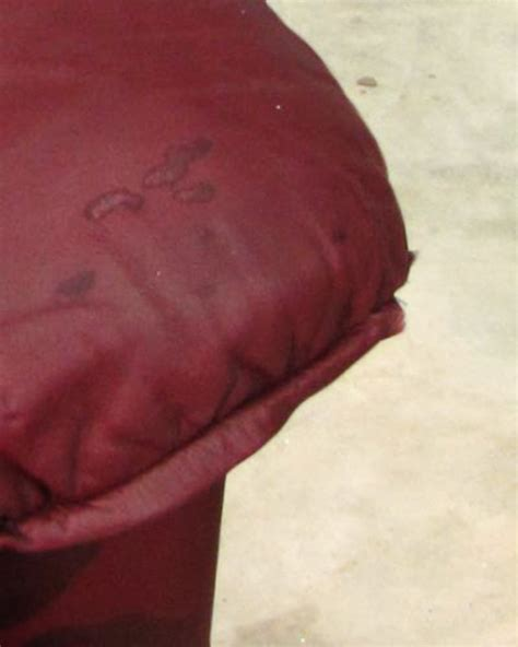 oil stain on leather couch best tips on leather furniture care by homearena