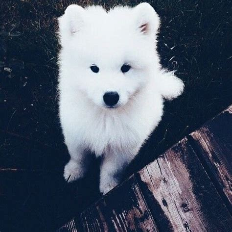 cute white dog pictures   images  facebook