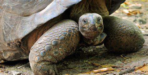 news baby dies  eating turtle blood  coronavirus