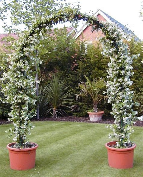 evergreen climbing plants for containers image result for http www topiaryhire co uk