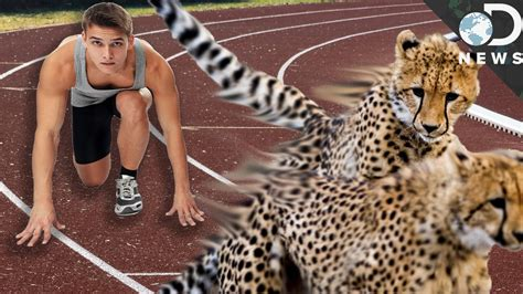 7 Most Animals by Why Are Humans Slower Than Most Animals From Dnews