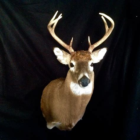 professional trainer near me trainer taxidermy coupons near me in malvern 8coupons