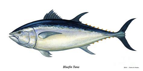 Tuna Fish Helps Lead Detox by Something Smells Fishy