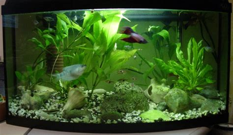aquarium decoration ideas freshwater freshwater aquarium fish ideas home decor ideas pics