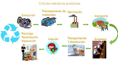 cadena productiva humana ciclos de la vida del ser humano imagui