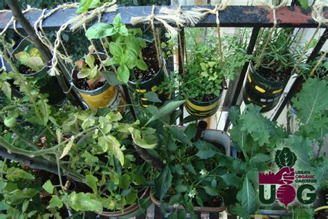 learn how to start your apartment garden and maximize your