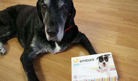 embark dna embark dna test review and coupon code that mutt
