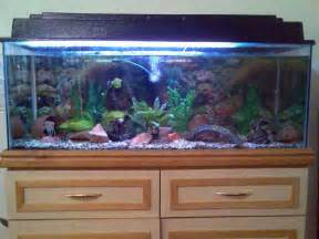Aquarium Decoration Ideas Freshwater Freshwater Aquarium Ideas Decor Images Amp Pictures Becuo