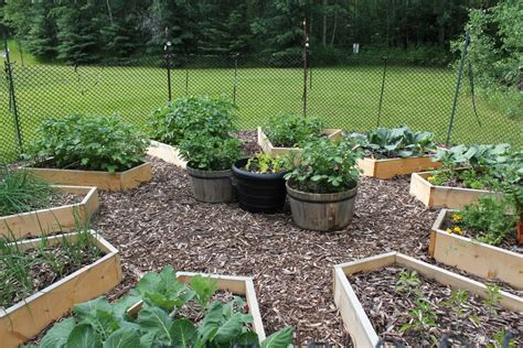 checking in on the raised bed garden cabinorganic