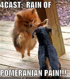 pomeranian meme pomeranian meme search home eevee and stormi search