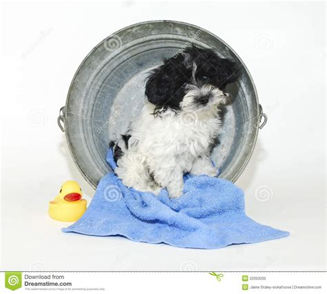 puppy tubs puppy sitting in a bath tub stock photo image 22053200