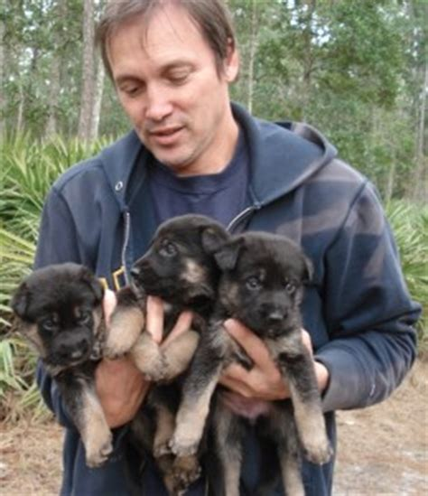 free puppies in albuquerque dogs albuquerque nm free classified ads