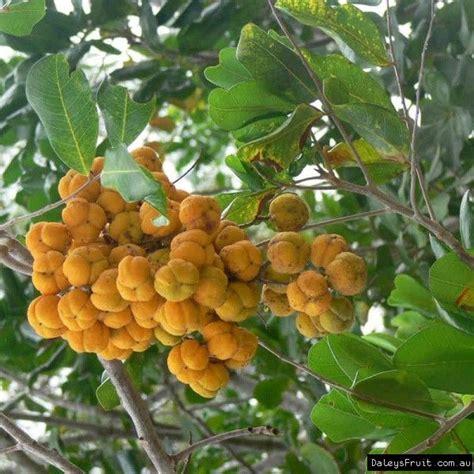 pin  jennifer grant  flora  east ballina crown