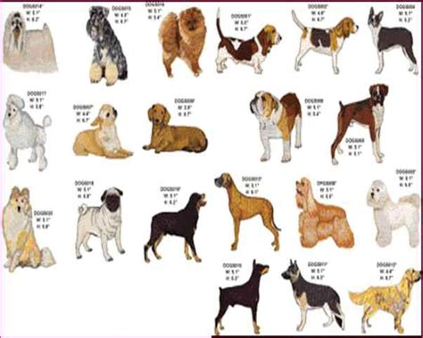 breeds alphabetical list of breeds alphabetical simple image gallery