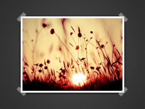 mooie bloemen afbeeldingen mooie bloemen presentatie psd afbeeldingen gratis psd