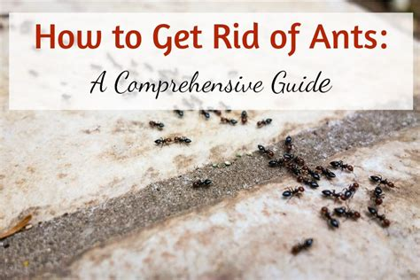 ant repellent complete guide on how to get rid