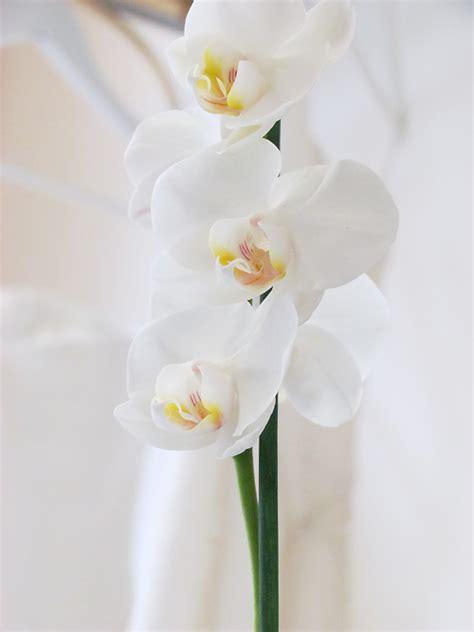 donare un fiore il significato dei fiori un orchidea per ringraziare