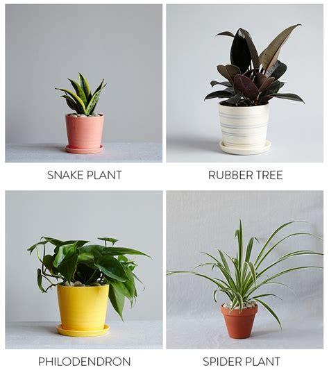 best bedroom plants best 25 best plants for bedroom ideas on pinterest