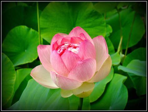 imagenes de flores hermosas grandes imagenes de flores hermosas grandes
