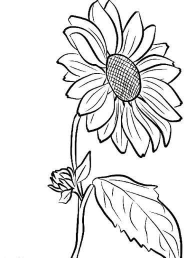 menakjubkan  contoh lukisan bunga pakai pensil gambar