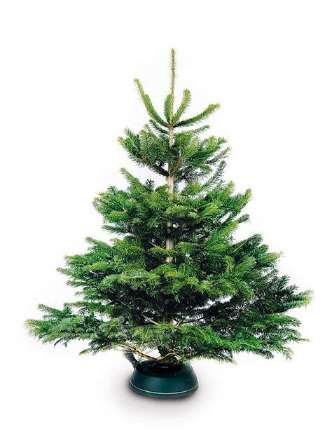 sorglos umterm christbaum zuhause wohnen