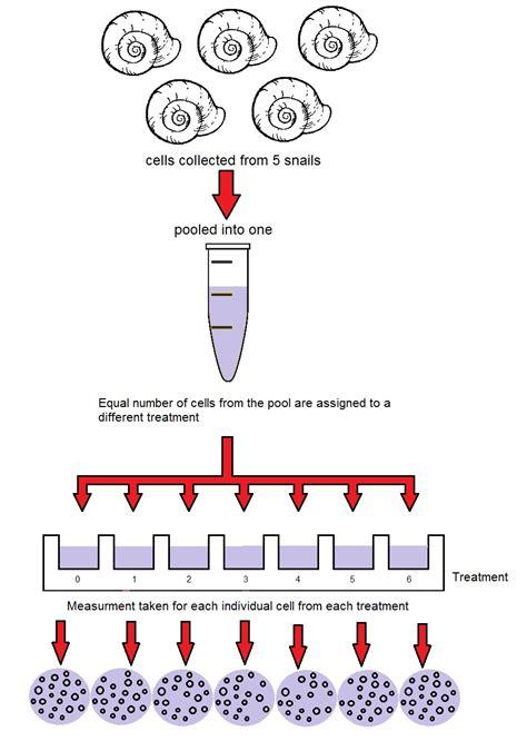 experimental design on biostatistics experiment design identifying the experimental unit