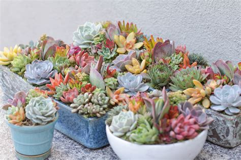 succulent containers for sale 100 succulent containers for sale succulent