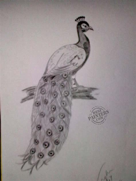 Peacock Pencil Drawing pencil sketch of peacock desipainters
