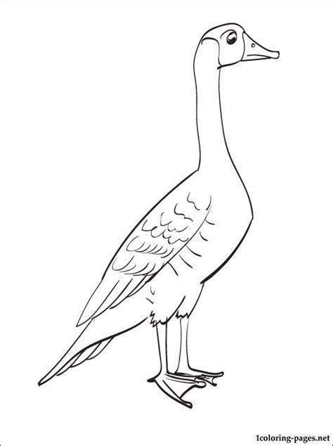 Nene Bird Coloring Page | coloring page nene bird coloring pages