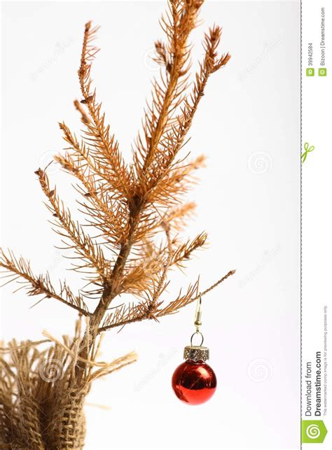 dead christmas tree stock photo image of problems