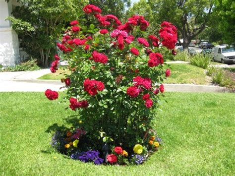 small flower bed ideas design for a small garden flower bed ideas designs for