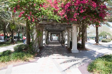 Usf Ta Mba by Picture Of Of South Florida Walkway