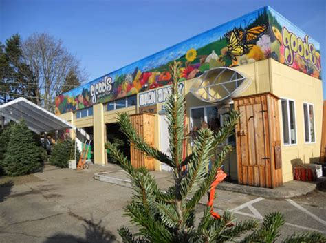 christmas trees bellingham wa goods nursery and produce gallery bellingham wa