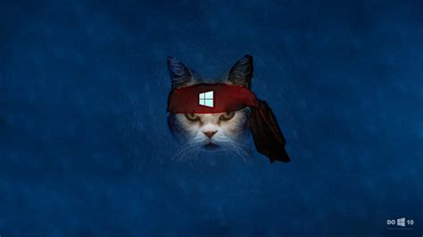 windows 10 wallpaper ninja cat windows 10 wallpaper angry ninja cat by zhalovejun on