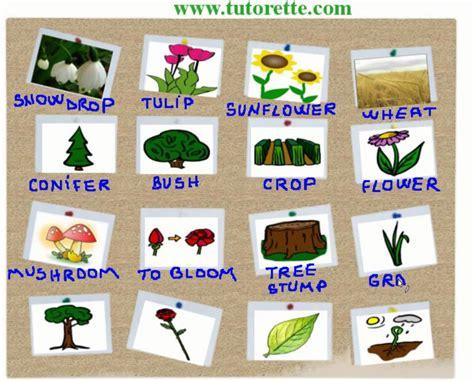 imagenes en ingles de flores curso de ingles plantas em ingles youtube