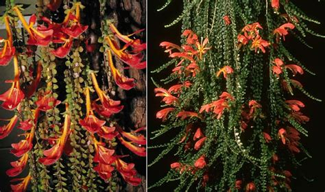 Cascading Indoor Plants plants amp flowers