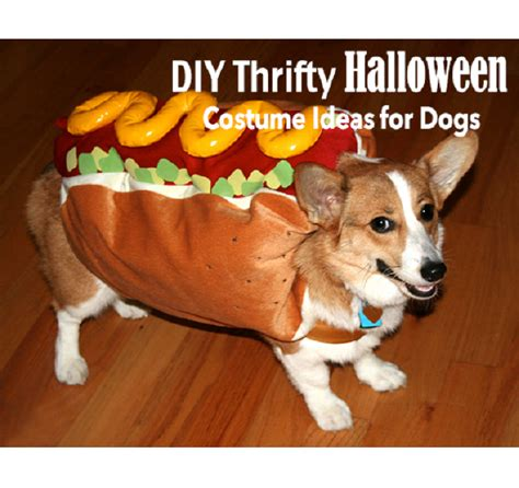 diy thrifty halloween costume ideas for dogs being tazim
