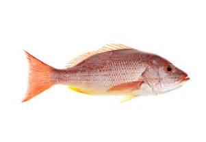 fish brine modernist cuisine