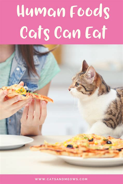 can humans eat food here are the human foods your cat can eat cats and meows