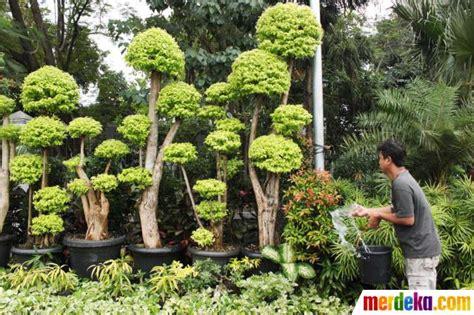 perbanyakan tanaman hias anggarsihtriyono